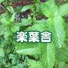 楽葉舎/無農薬野菜/完全無農薬米/食器/陶器