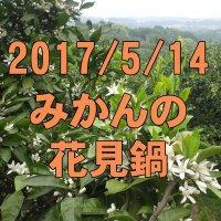 5/14みかんの花見鍋: 近場の秘境で天然アロマルーム体験!
