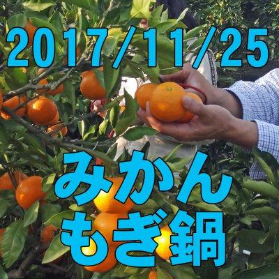 11/25 みかんもぎ鍋: 本格収穫作業のお手伝いと収獲したてのみかんでみかん鍋!