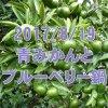 8/19 青みかんとブルーベリー鍋: 秘境里山で夏の旬とノスタルジー体験!