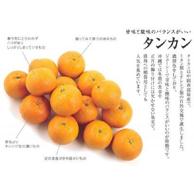 お届け日指定不可』鹿児島産「タンカン」 約3kg【送料込】3456円