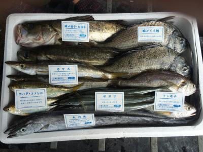 漁師おまかせ鮮魚セット~江戸前船橋鮮魚バトル!!(10000円コース)