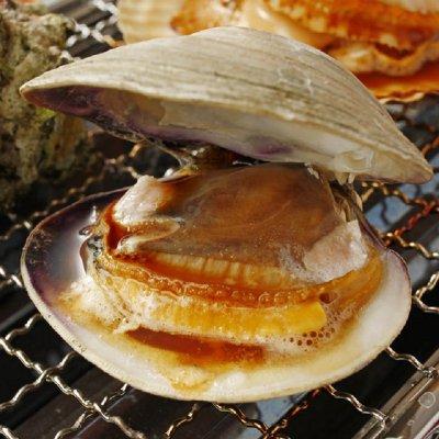 新鮮獲れたてホンビノス貝~横綱サイズ(Mサイズ)~ 5キロ