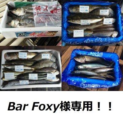 bar foxy様専用【季節の魚介類 おまかせ大漁セレクト(送料込み)】の画像1