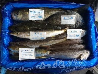 漁師おまかせ鮮魚セット~江戸前船橋鮮魚バトル!!(7000円コース)
