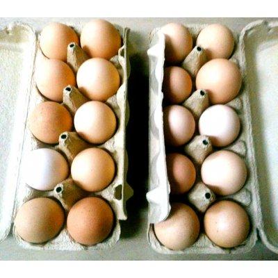 ピヨひな自然放鶏卵 10個入り マルシェ販売