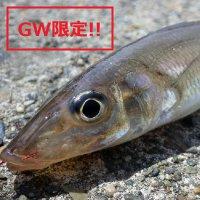 GW限定(5月3日~5日限定)!!乗合船ペアチケット!!