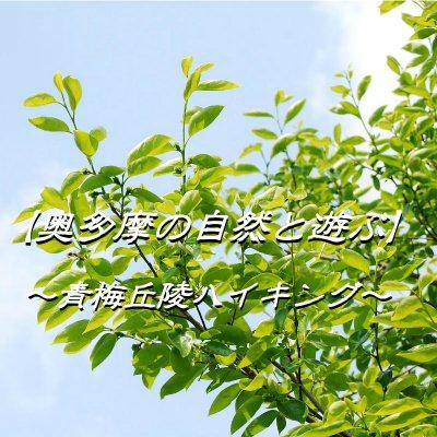 【10月17日(月)開催】奥多摩の自然と遊ぶ~青梅丘陵ハイキング~