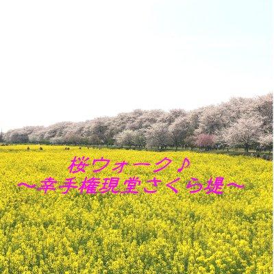 【4月6日(木)開催】幸手権現堂さくら堤お花見ウォーク ~桜並木散策とお花見ランチ~