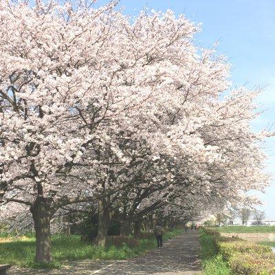 【4月6日(木)開催】幸手権現堂さくら堤お花見ウォーク ~桜並木散策とお花見ランチ~のイメージその2