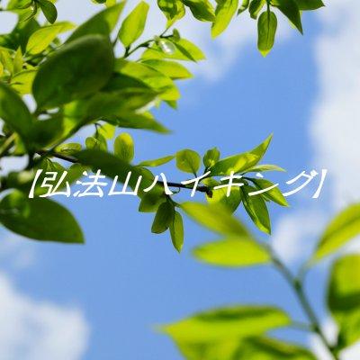 弘法山ハイク~桜並木の山道を歩く~