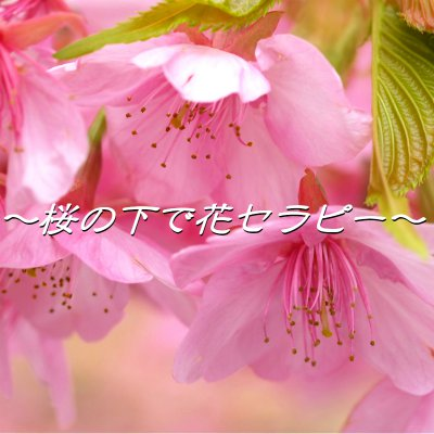 桜の下で花セラピー! ~飯能河原の春を満喫~