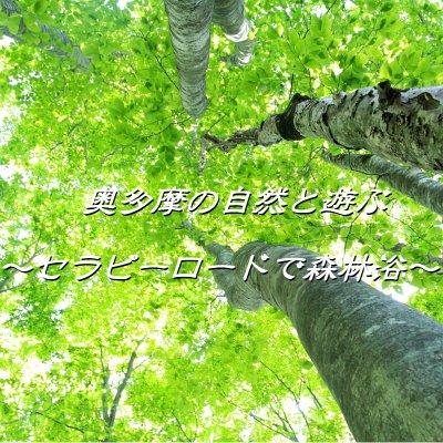 奥多摩の自然と遊ぶ~セラピーロードで森林浴~