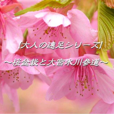 【3月2日(木)開催】【大人の遠足シリーズ】桜の盆栽教室と大宮氷川神社参道を歩く