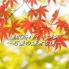 【11月14日(月)開催】箱根湯坂路ハイキング~石畳の鎌倉古道を歩く