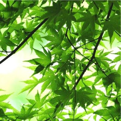 【myamya限定】素の自分が目覚めるMyaMya高尾山ハイキング~自然を味方につけてしなやかに生きる~