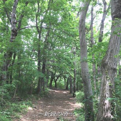 弘法山ハイク~緑輝く山道を歩く~のイメージその3
