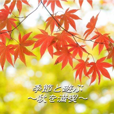 【準備中】【11月20日(月)開催】季節と遊ぶ~紅葉撮影会&森林浴in国営武蔵丘陵森林公園~