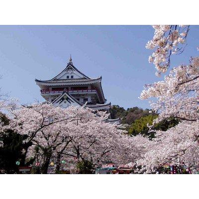 熱海城桜祭りでお花見♨「食べても太らないビューティー合宿」3/28~29