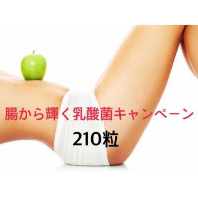 【銀行支払いのみ】乳酸菌キャンペーンバリューパック