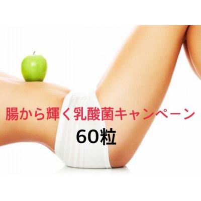 【銀行支払いのみ】乳酸菌キャンペーン60粒入りレギュラー