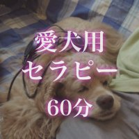 メタトロンセラピー60分(愛犬用)