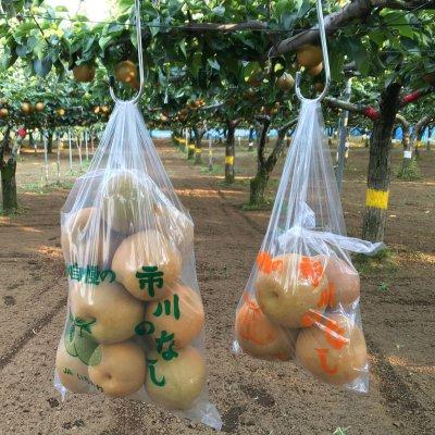 〜梨狩り体験〜 旬の梨をご自身で収穫してみてください♪ 梨狩り袋(5〜6㎏相当)&お得用梨袋(約2...