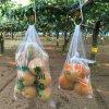 ~梨狩り体験~ 旬の梨をご自身で収穫してみてください♪ 梨狩り袋(5〜6㎏相当)&お得用梨袋(約2㎏)セット