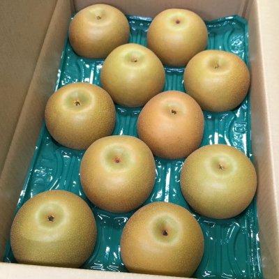 【人気急上昇‼】 あきづき梨 5㎏ 5Lサイズ 10個入り