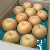 果汁ジューシー♪】 豊水梨 5㎏ 4Lサイズ 12個入り