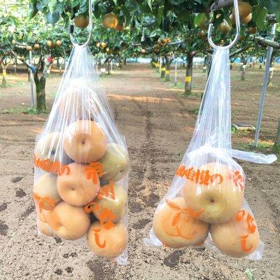 ~梨狩り体験~ 旬の梨をご自身で収穫してみてください♪ 梨狩り袋(3〜4㎏相当)&お得用梨袋(約2...