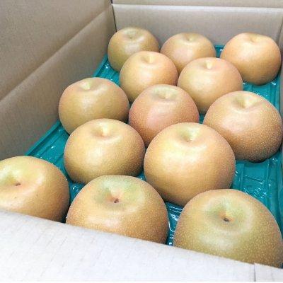 ~予約受付 9月上旬頃から発送予定~【果汁ジューシー♪】 豊水梨 5㎏ 3Lサイズ 13~14個入り