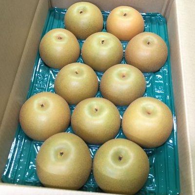 【人気急上昇‼】 あきづき梨 5㎏ 4Lサイズ 12個入り