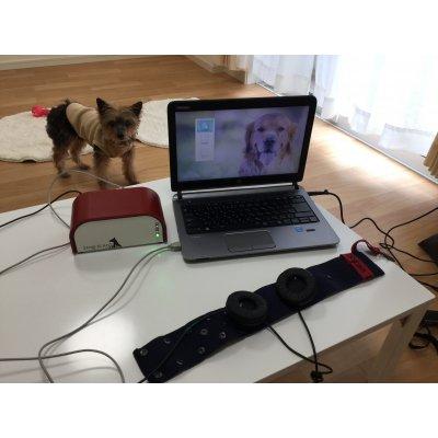 犬のエイジングケア ベーシックコース