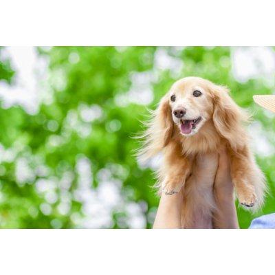 【7歳を過ぎた愛犬の健康管理に‼︎】愛犬ミネラル・有害金属被毛検査