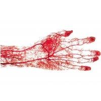3分でわかる♪血管年齢・臓器・ストレス測定会