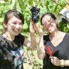 低農薬葡萄(ぶどう)4キロ5,...