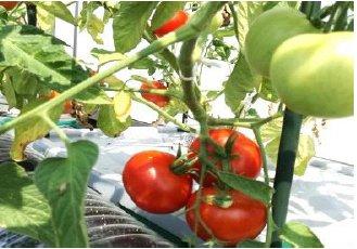 ほったらかしで安全野菜を自分で簡単に作れたら良くないですか、 水やりの心配が無い、手間いらずで出来るオーガニックプランター 水やり心配なし、ほったらかしで安心野菜が どんどん育つ世界初の新技術 電源は不要!自動野菜栽培システム お好きな野菜の種を選んで頂けます。の画像1
