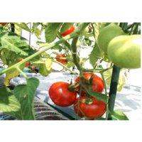 自然野菜オーガニックプランターほったらかしで安心野菜がどんどん育つ世界初の新技術電源不要!自動野菜栽培システム