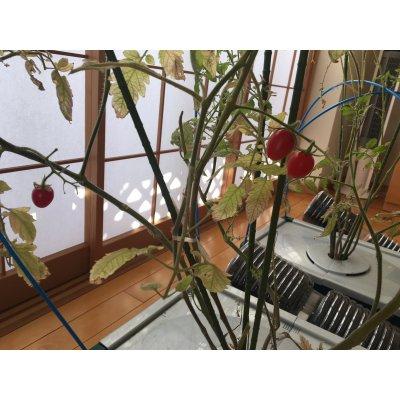 【選べる野菜カプセルCグループ】ほったらかしで安全野菜を自分で簡単に作れたら良くないですか、 水やりの心配が無い、手間いらずで出来るオーガニックプランター 水やり心配なし、ほったらかしで安心野菜が どんどん育つ世界初の新技術 電源は不要!自動野菜栽培システム お好きな野菜の種を選んで頂けます。