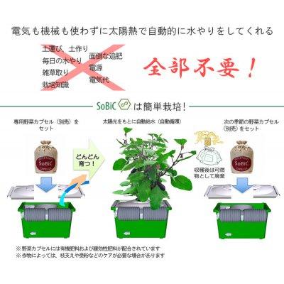ほったらかしで安全野菜を自分で簡単に作れたら良くないですか、 水やりの心配が無い、手間いらずで出来るオーガニックプランター 水やり心配なし、ほったらかしで安心野菜が どんどん育つ世界初の新技術 電源は不要!自動野菜栽培システム お好きな野菜の種を選んで頂けます。の画像5