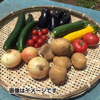 今が旬 夏野菜4点セット