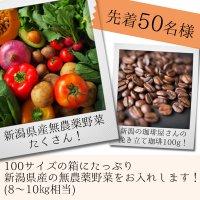 先着50名様限定!10月中旬発送!新潟県無農薬...