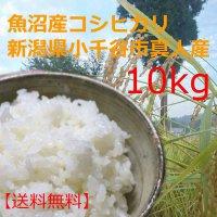 送料無料・魚沼産こしひかり10kg平成29年収穫・新潟県小千谷市真人地域産