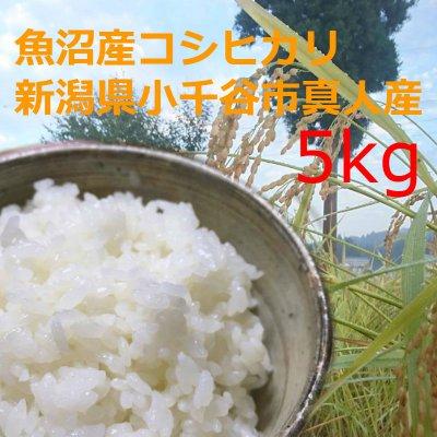 魚沼産こしひかり5kg平成29年収穫・新潟県小千谷市真人地域産