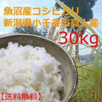 送料無料・魚沼産こしひかり30kg平成29年収穫・新潟県小千谷市真人地域産