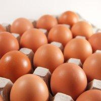 北海道美しの森ファームの卵[Mサイズ25個入]【送料無料】メーカー直送の為、代金引換不可