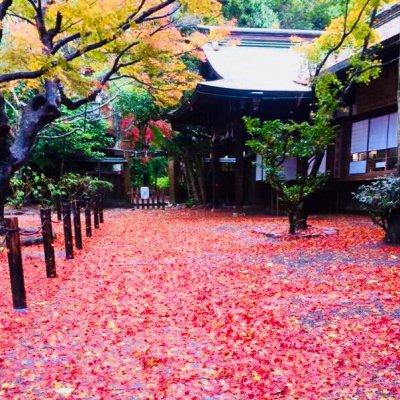 ミラクル  ミホの鎌倉散歩開運ツアーのイメージその2