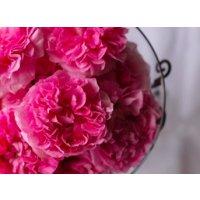 Damask Rose(ダマスクローズ)香油5ml