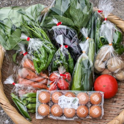 大分県 まるか三代目 季節の野菜セット M 無肥料・無農薬